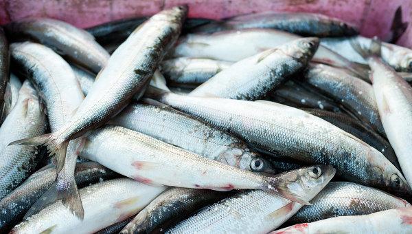 fishexport